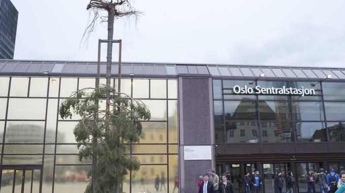 Hvorfor i all verden står et svært furutre opp ned utenfor Oslo S?